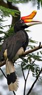 Kalimantan 3